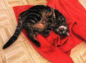 Consejos para que tu gato esté en forma