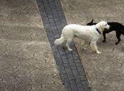 Valparaíso inició nuevo plan sobre Tenencia Responsable de Mascotas