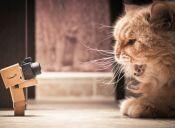 Cat Video Festival: El evento que elige los mejores virales de gatos en Internet