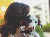 Top 10: Las razas de perro más cariñosas