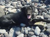 Este solidario perrito no se conforma e insiste en salvar a pescados