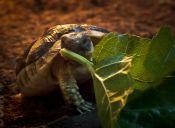 Hipócrates, una tortuga