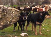 Organización Argentina pide firmas para evitar matanza de perros abandonados en Tierra del Fuego