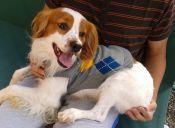 Historias de Mascotas: El perrito que fue abandonado en una noche de lluvia