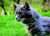 'Pawscout', la aplicación que busca mascotas perdidas con ayuda de los vecinos