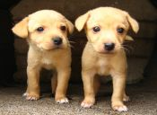 ¿Le cuesta adaptarse? Problemas de mascotas recién adoptadas y cómo ayudarlas