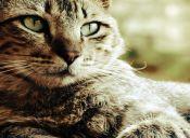 Historia de Run Run: La gatita fanática de la lechuga