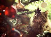 ¿Es bueno regalar una mascota para Navidad?