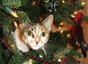 10 tips para evitar que tu gato destruya el árbol de Navidad