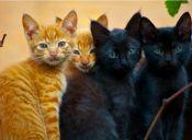 Rescatan a gatitos que fueron robados para comercializar su carne y piel en China