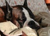 Video: ¿Qué hace tu perro cuando no estás en casa?