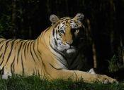 Buin Zoo inicia temporada de visitas nocturnas al parque