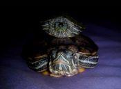5 cosas que identifican a los dueños de tortugas