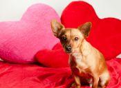 San Valentín con mascotas: panoramas para disfrutar con tu verdadero amor