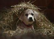 Super Bowl: comercial protagonizado por un cachorro podría ser el favorito de este año