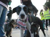 ¡Excelente noticia! Primer sentenciado por maltrato animal en Argentina