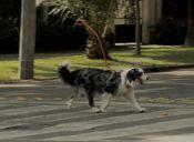 Dueños Invisibles: Ingeniosa campaña para fomentar la adopción de perros abandonados