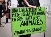 ¿Qué dice la Ley chilena sobre protección animal?