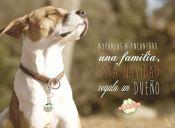 #RegalaUnDueño: Con tierno video buscan incentivar la adopción esta navidad