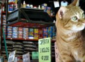 La comida indicada para tu gato