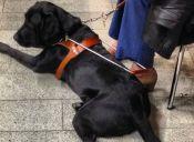 Zooterapia: El apoyo de los perros en la sanación