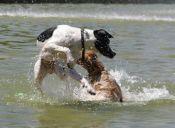 ¿Qué hacer ante una pelea canina?