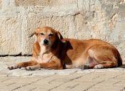 Historias de perros y carteros