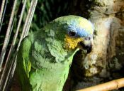 ¿Por qué motivos las aves se despluman?