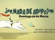 Nueva jornada de adopción gatuna organizada por la Fundación Adopta