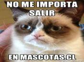 Grumpy Cat: El gato más famoso del 2012