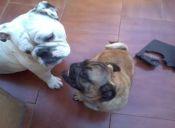 Cortarles la cola y oreja a las mascotas. ¿Es necesario?