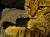 Polémica campaña contra los gatos en Nueva Zelanda