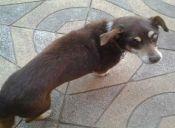 Mi perro tiene cataratas, ¿qué hago?