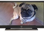 Dog TV, el canal favorito de tu perro