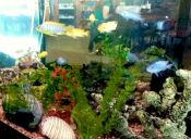 ¿Cómo tener un acuario limpio y sano?