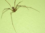 ¿Cómo y qué comen las arañas?