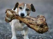 Lo mejor de la comida gourmet para nuestros perros