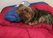 5 tips para acampar con tu perro