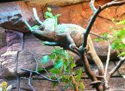 10 tipos de mascotas más exóticas en Chile