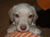 Seis tips para que las primeras noches de tu mascota bebé sean las mejores