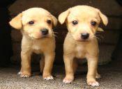 Medicina preventiva en animales de compañía