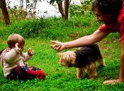 Bebés y mascotas: previene enfermedades e infecciones