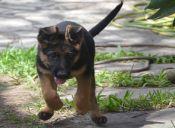 Seis tips para fortalecer la socialización en los cachorros