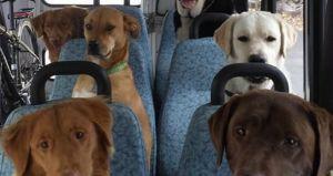 Perros que se Suben Solos al Transporte público: Sospecho que Traman Algo