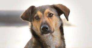 Adoptar un animalito abandonado, el más grande acto de amor (video)