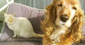 Perros y gatos de Buenos Aires ahora están protegidos por la ley