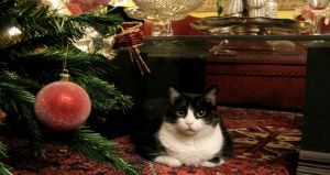 5 cosas que todo dueño de gato gordo debe saber