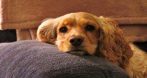 Historias de mascotas: Mi perrita dio su vida por defendernos