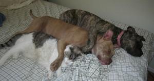 Estudio demostró cómo sienten perros y gatos