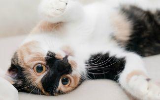 7 vídeos de gatos graciosos que revolucionan la web
